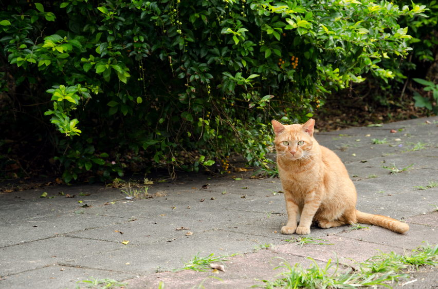 Cat sitting on the ground outdoors