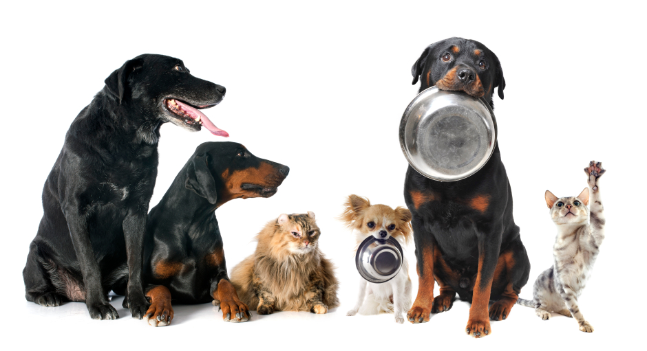 Cats and dogs with metal bowls