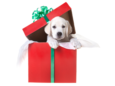 Puppy in a gift box