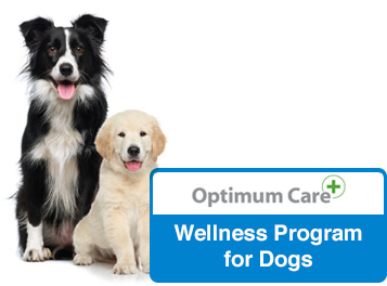 optimum care wellness program for dogs