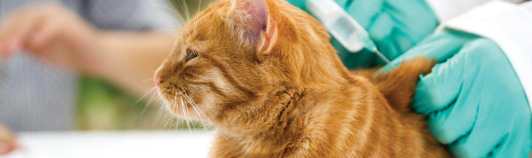 cat-vaccinations