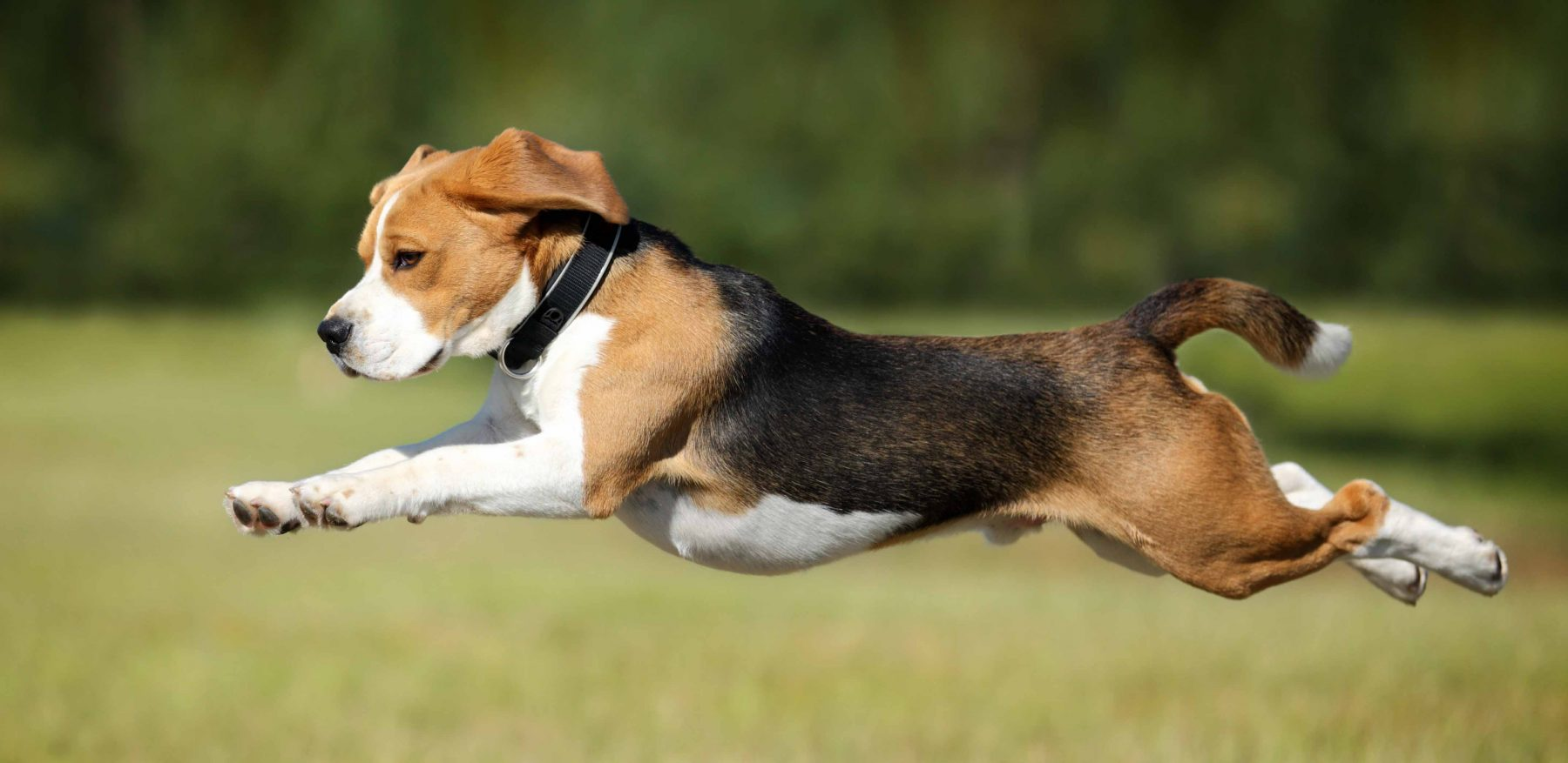 overweight-dog-help