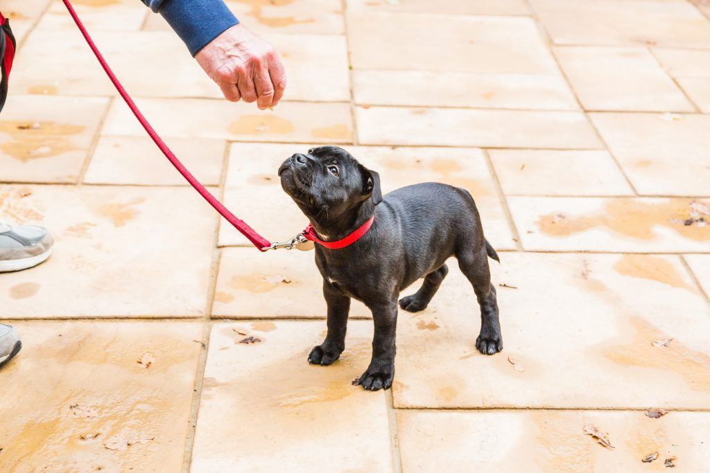 puppy-food-blog