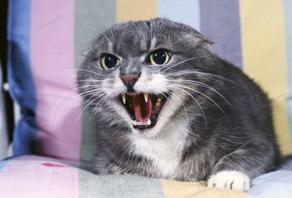 declawing cat behaviour