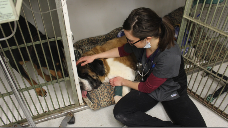 Neda the dog recovering from dental procedure