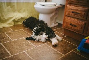 Dog lying on the bathroom floor