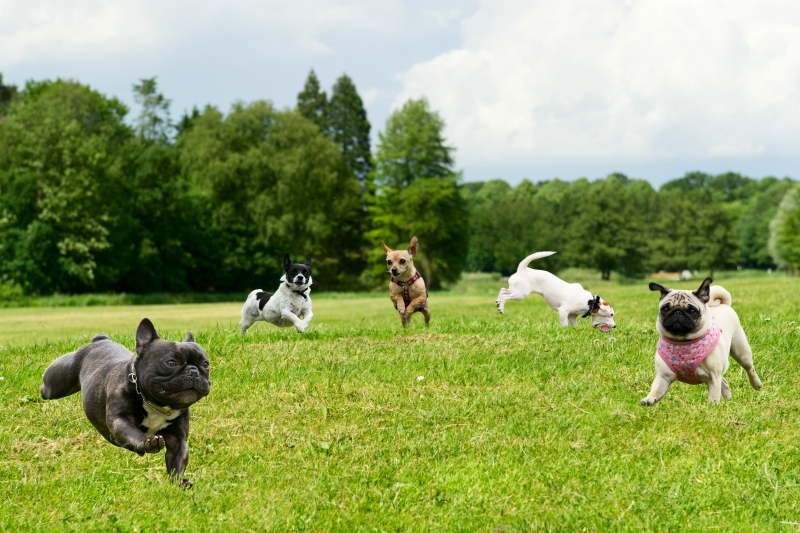 Top 5 Dog Parks in Toronto