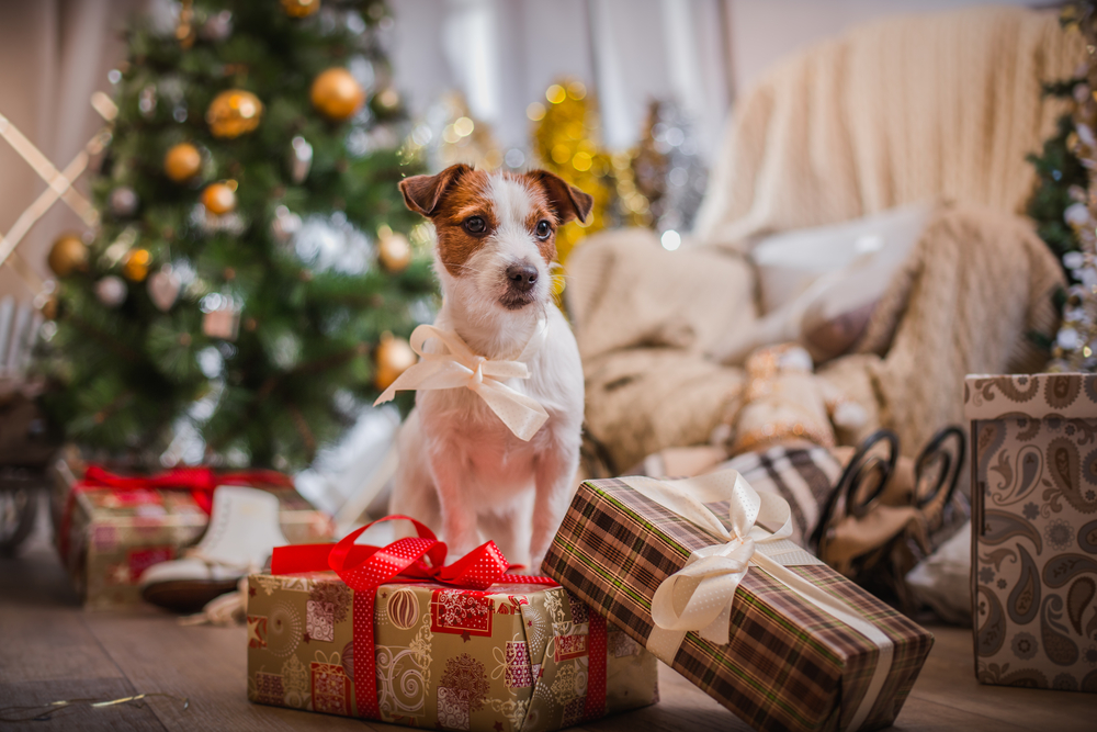 Dog with a white ribbon bow and Christmas presents and Christmas tree around it