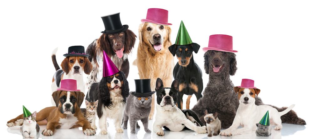 Dogs and cats with top hats and party hats