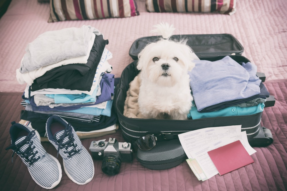 Dog sitting on an open suitcase