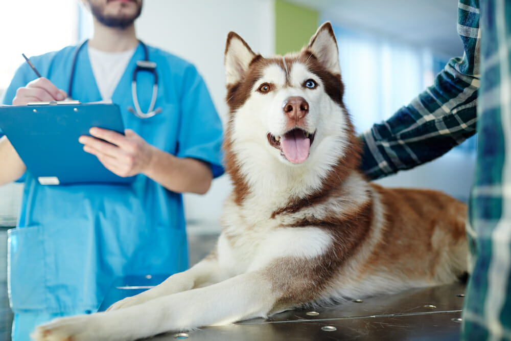 Dog with owner and Veterinarian at the Vet