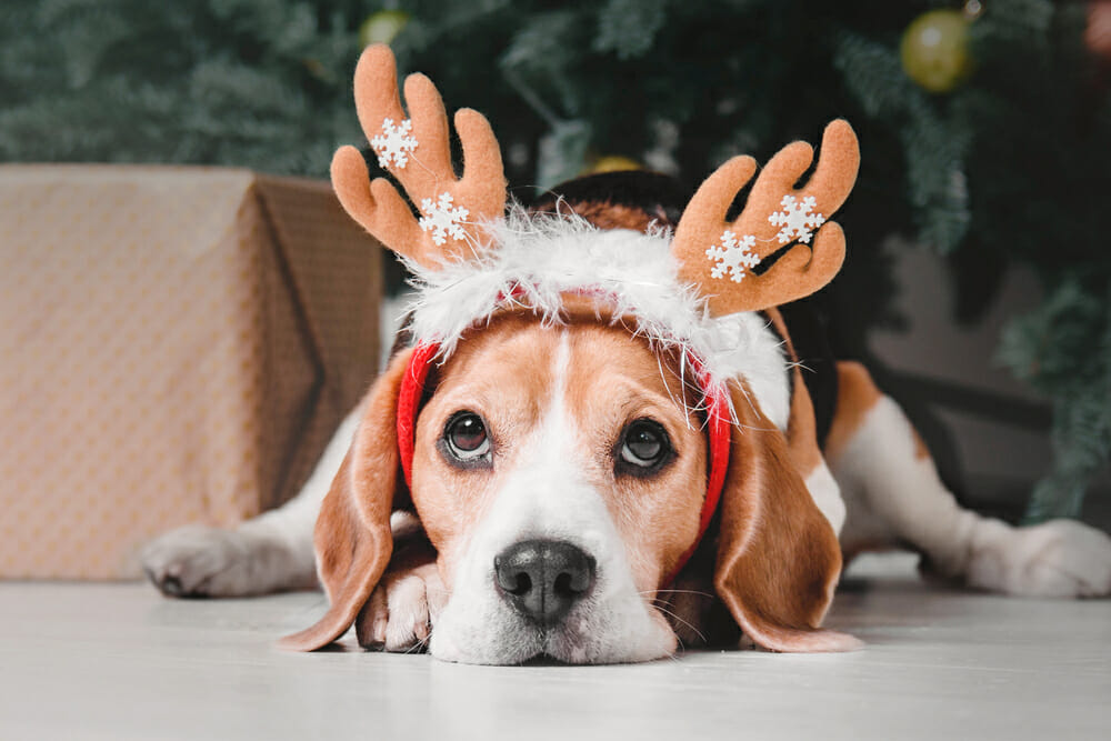 Dog lying on the floor with a reindeer headband